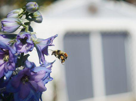 Flower, Bee, Bumblebee, Flying, Midair, Plant, Insect