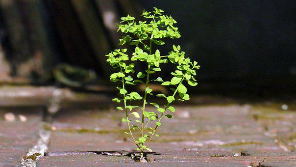 Weed, Wild Growth, Nature, Growth