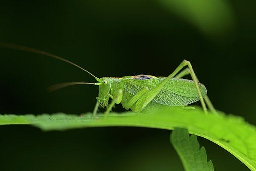 Insect, Insects, Summer Insects, The Chi, Nature