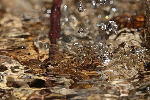 Water, Drip, Wet, Liquid, Branch, Stones