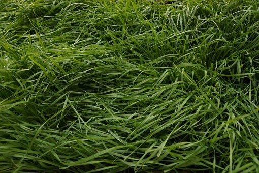 Grass, Field, Green, Nature, Landscape, Meadow, Summer