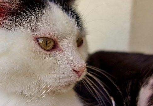 Cat, Domestic Cat, Mieze, Pet, Animal, Kitten