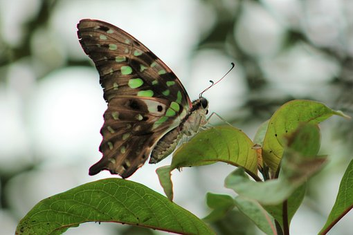Butterfly, Nature, Animal, Papiliorama Kerzers