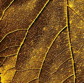 Leaf, Bush, Plant, Summer, Flora, Nature