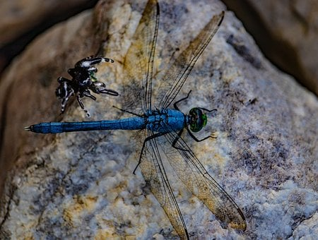 Dragonfly, Spider, Wings, Grass, Insect, Nature