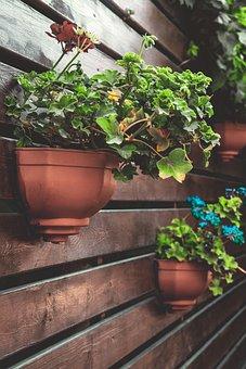 Flowerpot, Aqil, Plant, Nature, Cup Cooking Pot, Garden