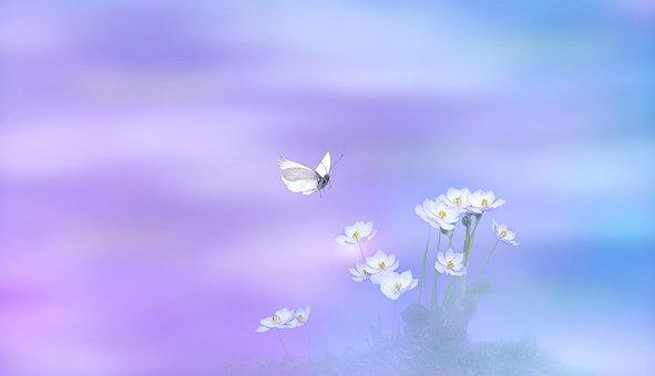 Flowers, Plant, Blossom, Bloom, Nature, Spring, Bloom