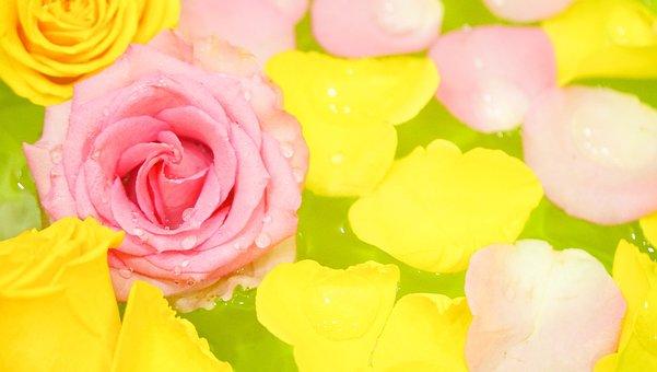 Roses, Flower, Love, Petal, Rose, Romance, Romantic
