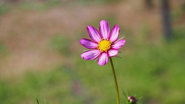 Blossom, Bloom, Flower, Pollen, Pink, Summer, Plant