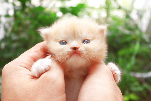 Cat, Small, Kitten, Pet, Animal, Portrait, Fur, Kitty
