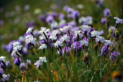 Purple Flowers, Decorative, Flower, Spring, Plant