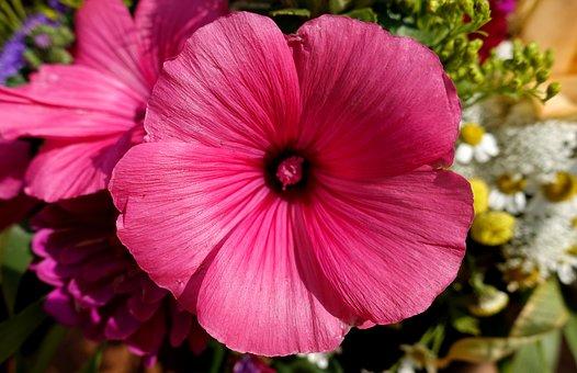 Flower, Pink, Summer, Nature, Plant, Blossom, Bloom