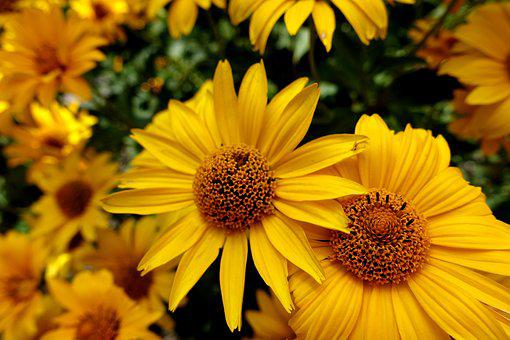 Flower, Yellow, Plant, Summer, Blossom, Bloom, Garden