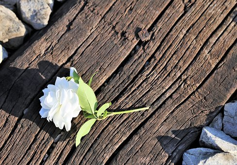 Tiny White Rose On Railway, Loving Memory, Lost Love