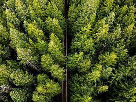 Oregon, Tree, Trees, Landscape, Usa, Outdoors, Wood