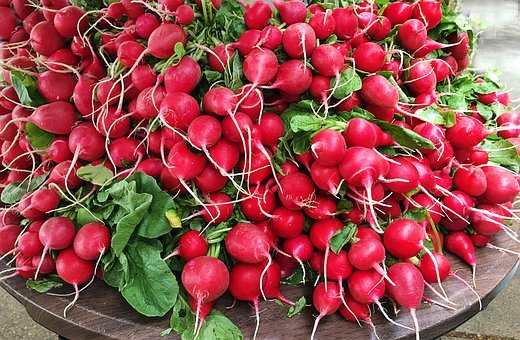 Radishes, Veggies, Vegetables, Fresh, Summer, Harvest