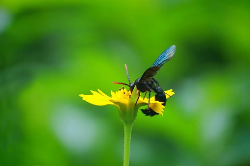 Wasp, Blue Wasp, Blue, Nature, Insect, Bloom, Wings