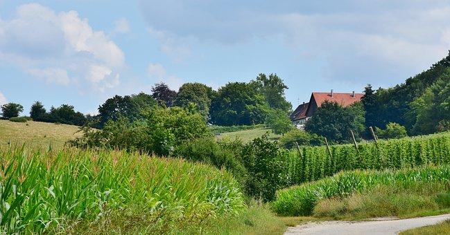 Agriculture, Hof, Farm, Grass, Rural, Sky, Plant