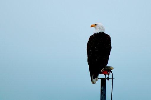 Seward, Cruise, Alaska, Eagle