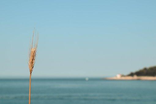 Sea, Grain, Wheat, Ary, Mediterranean, Coast, Croatia