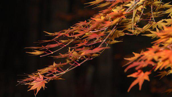Autumn Leaves, Gangneung, Autumn, Beauty, Nature
