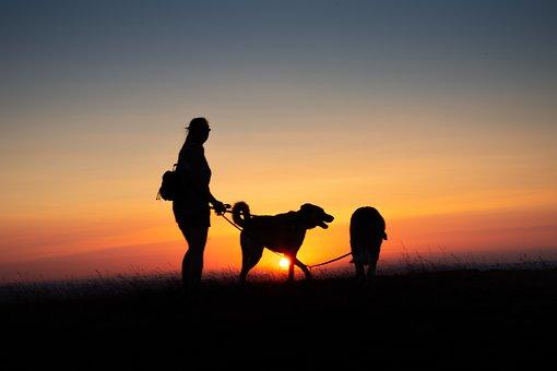 Evening, Back Light, Silhouette, Woman, Dog, Orange