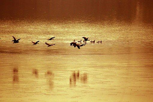 Bangladesh, River, Bird, Brown River