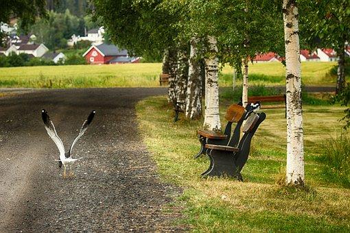 Seagull, Bird, Landscape, Nature