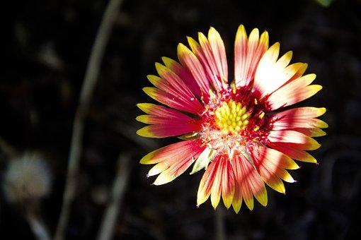Garden, Flower, Bloom, Petals, Flowers, Macro, Petal