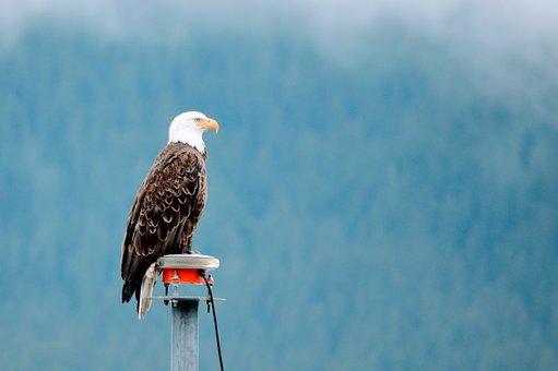 Seward, Cruse, Alaska, Eagle