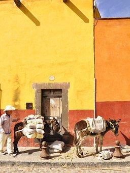 San Miguel De Allende, Donkey, Mexico