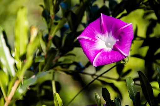 Flower, Garden, Bloom, Nature, Flora, Spring