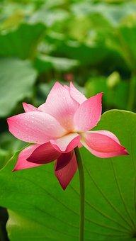 Flower, Flora, Nature, Garden, Leaf, Petal, Blooming