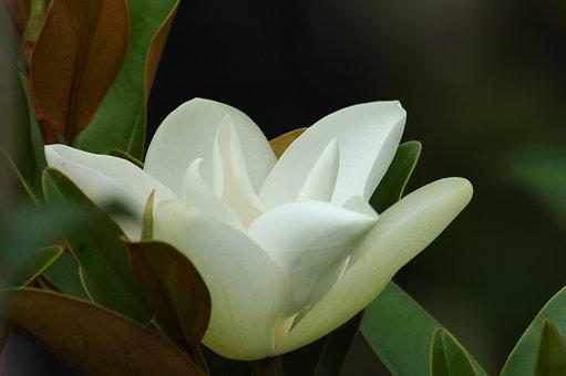 Nature, Flora, Flower, Leaf, Beautiful, Garden, Summer