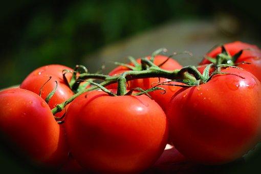 Tomatoes, Trusses, Bush Tomatoes, Vegetarian, Food