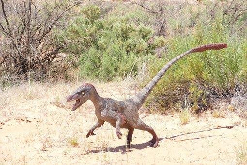 Dinosaur, Raptor, Velociraptor, Fossil, Cretaceous