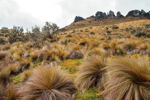 Pajonal, Landscape, Adventure, Grass, Moor