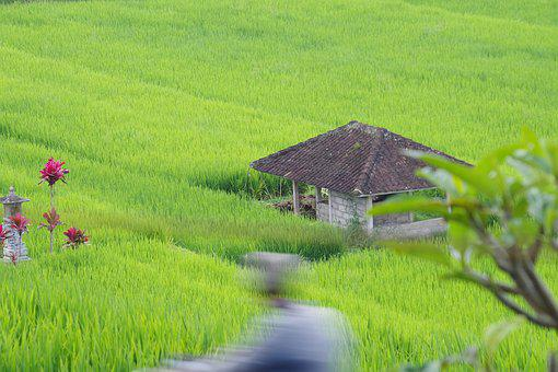 Paddy, Green, Agriculture, Landscape, Mountain, Holiday
