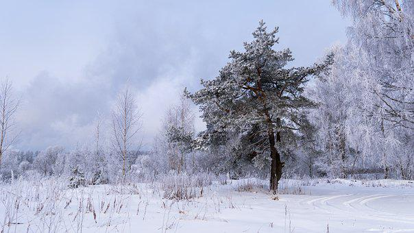 Spruce, Winter, Christmas, Holiday, Nature, Snow, Tree