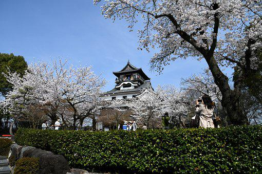 It, Castle, Inuyama, National Treasure, Cherry Blossoms