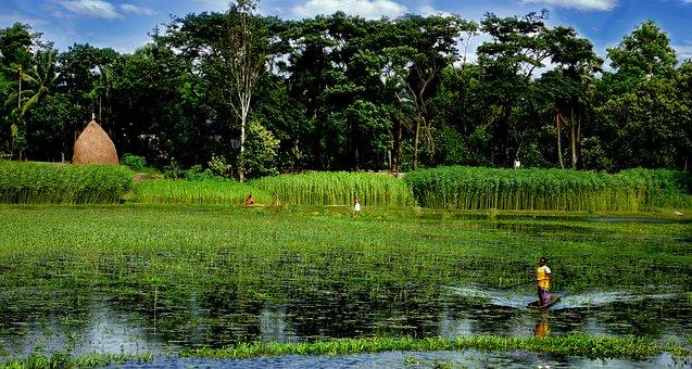 Bangladesh, Lake, Boat