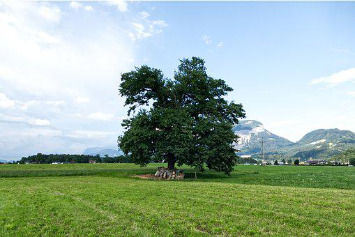 Tree, Meadow, Landscape, Nature, Rural, Field, Summer