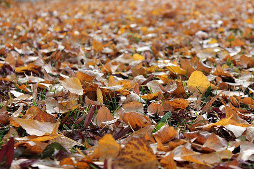 Leaves, Autumn, Fall, Close Up, Ground, Colorful, Leaf