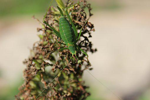 Insect, Aphid, Nature, Aphids, Macro, Ladybug, Beetle
