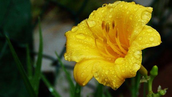 Flower, Yellow, Landscape, Nature, Garden, Flowers