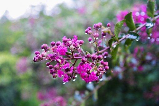 Flower, Violet, Nature, Plant, Garden, Bloom, Rosa
