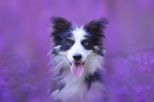 Dog, Portrait, Animal, Animal Portrait, Pet, Dog Head