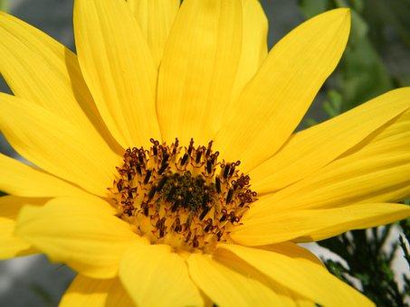 Blossom, Bloom, Flower, Nature, Plant, Petals, Bloom
