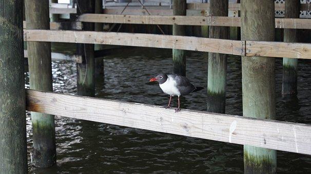 Bird, Pier, Water, Dock, Ocean, Wildlife