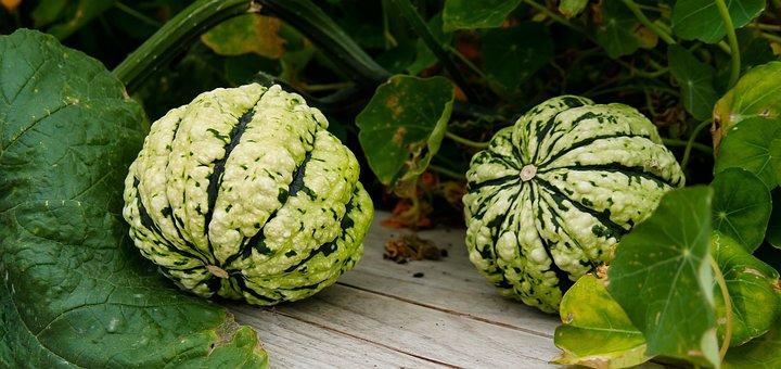 Nature, Plant, Pumpkin, Garden, Gourd, Fruit, Food